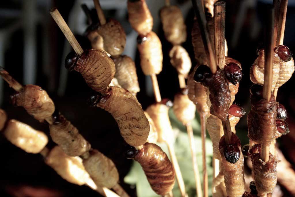 Suri - Peruvian Delicacy