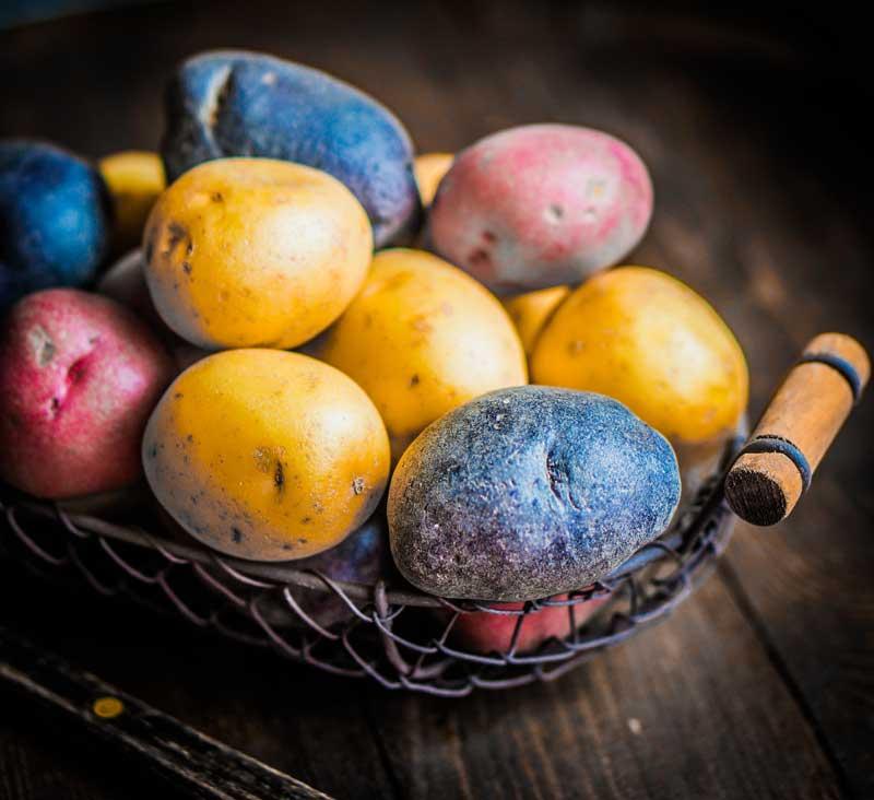 Red Blue and Purple Peruvian Potatoes