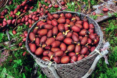 Aguaje Peruvian Fruit