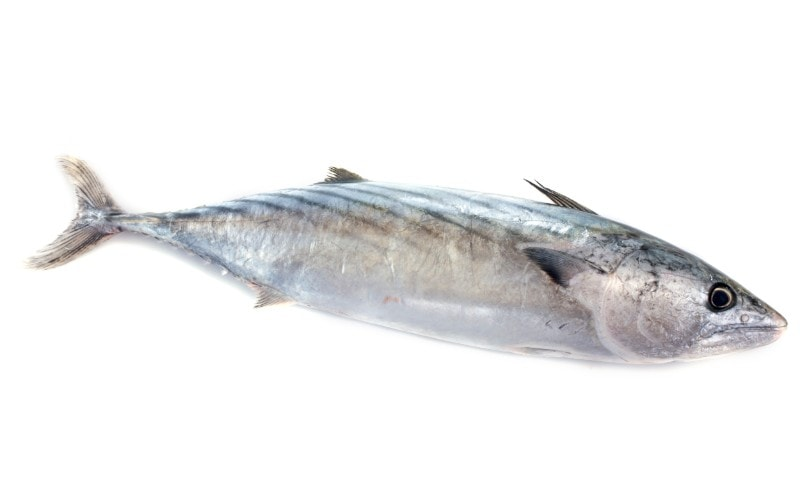 bonito fish Peruvian food